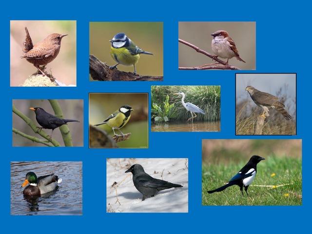 Thema Vogels by Petra van der Pol