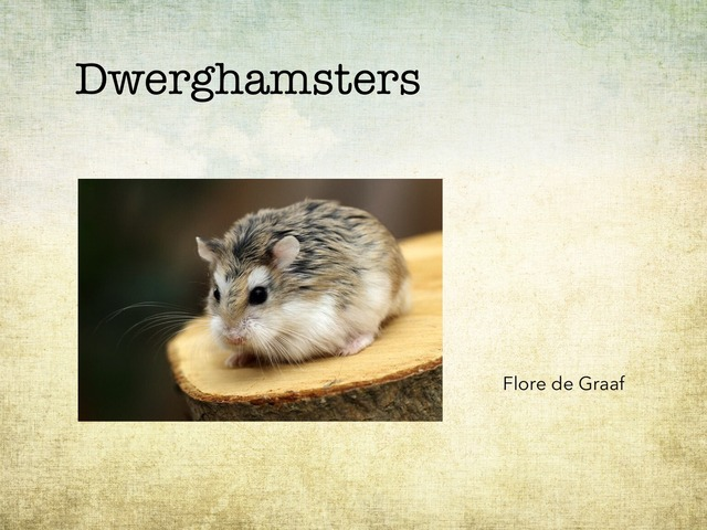Dwerghamsters by Mirjam Calis