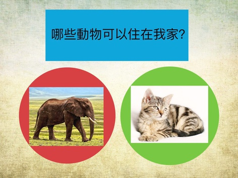 Prep STP Pets by LS Chinese Department