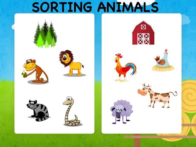 Sorting Animals by Hadi  Oyna