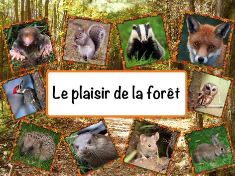 Le plaisir de la forêt by Catherine Davies