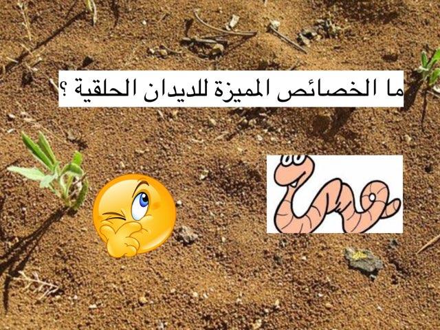 الديدان الحلقية by brooy 93