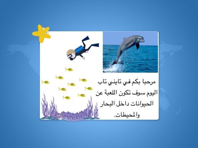 البحار والمحيطات by Zinah Almorad