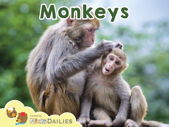 Monkeys by Kids Dailies