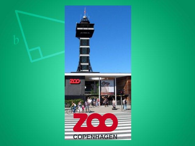 Zoo by Michael Hjort-Pedersen