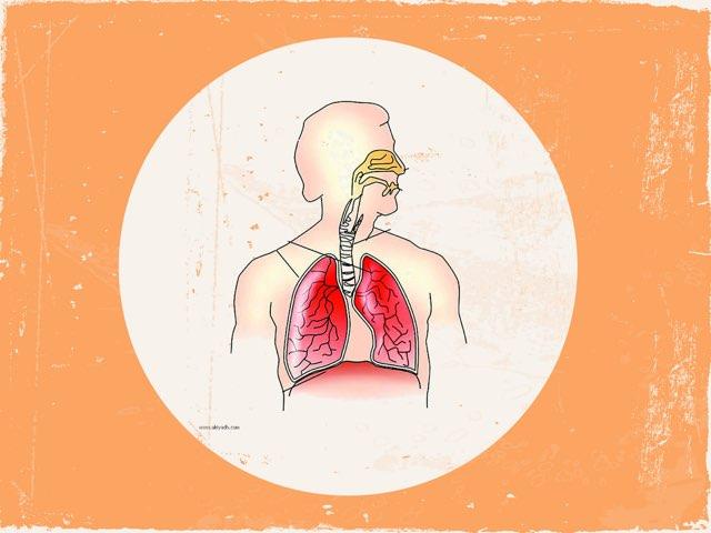 الجهاز التنفسي  by Techare Monera