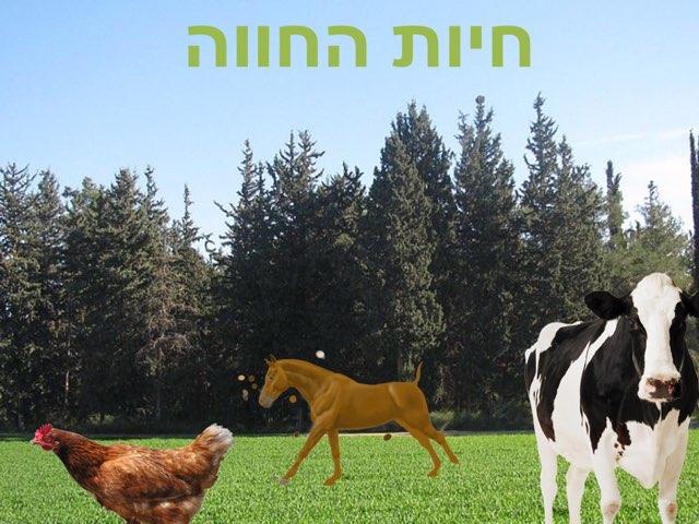 חיות החווה  by סיון דרויש