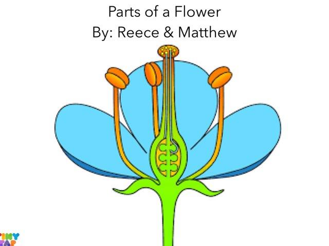 Reece & Matthew's Flower by Ashley Shaw