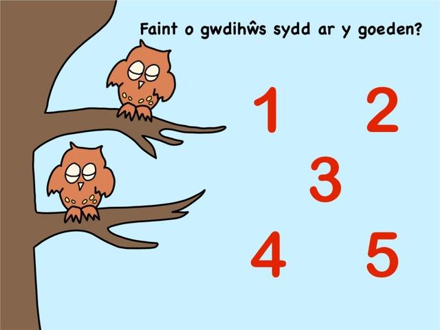 Cyfri Y Gwdihŵ A Gysgodd Drwy'r Nos by Bethan Thompson