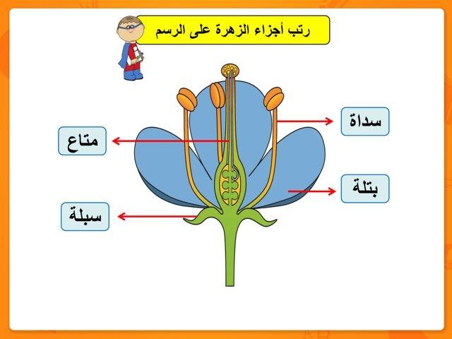 أجزاء الزهرة by Baddow A.M.N