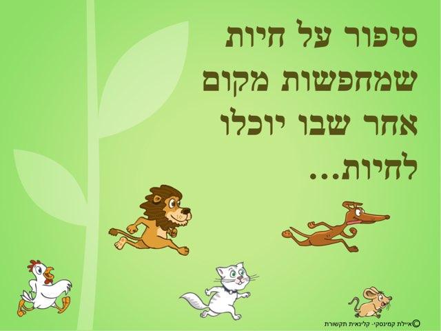 חיות במרחב by Ayelet Levy Kaminsky