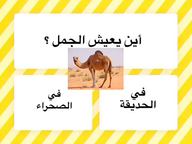 الجمل والسيارة by لطيفه الشامي