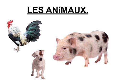 Les Animaux Désignation 2. by Valerie Escalpade