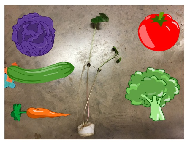 BA101 - Fruit, Roots, Flowers, Leaves, Stem by Thomas Jefferson