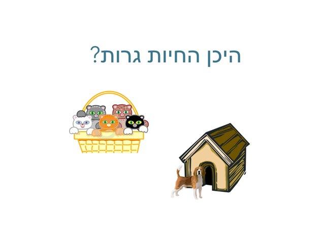 היכן החיות גרות by Shiri Pinkas