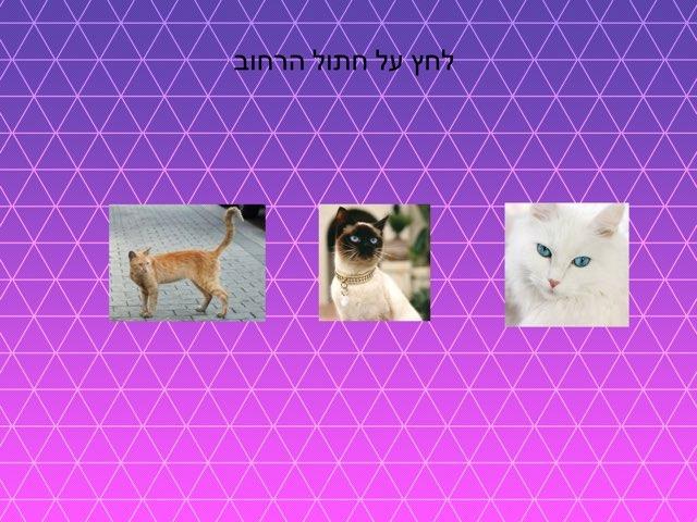 חתולים ליאל by בית ספר קישון