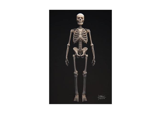 Skelet by Tony Huijzer