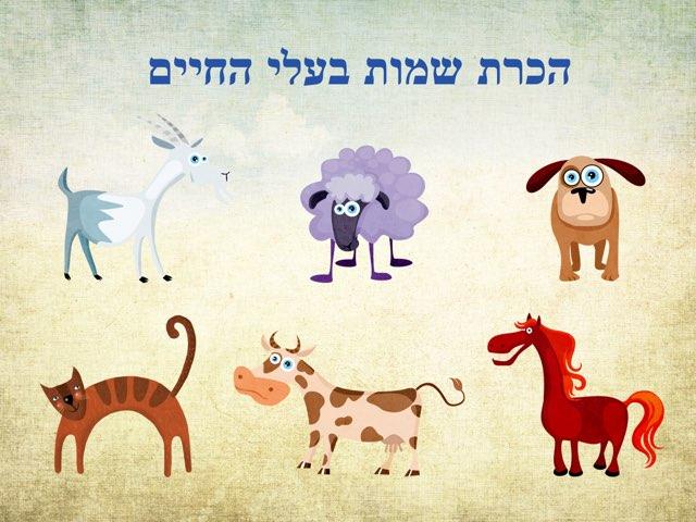 הכרת שמות בעלי החיים by גלי דקל