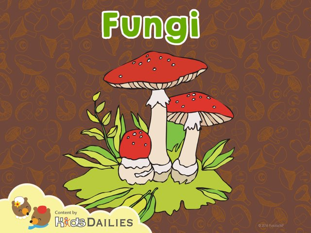Fungi by Kids Dailies