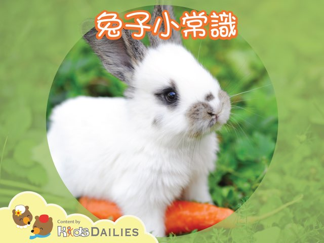 一起來學習關於兔子的知識吧! by Kids Dailies