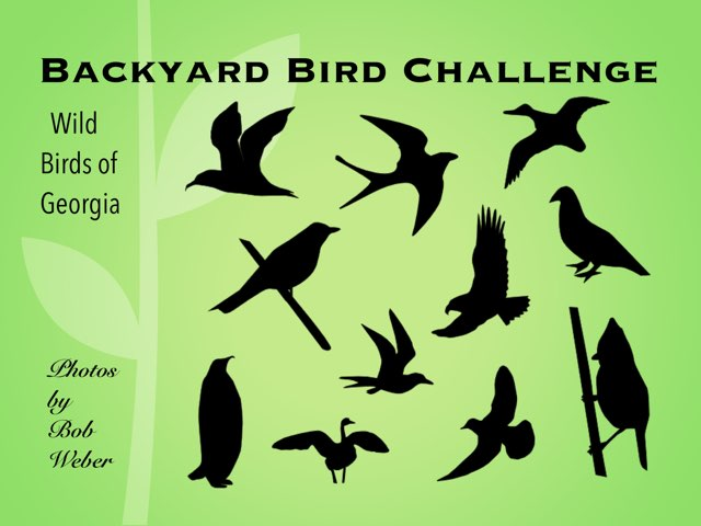 Backyard Bird Challenge by Ellen Weber