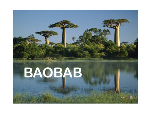 Baobab by Marta Carracedo