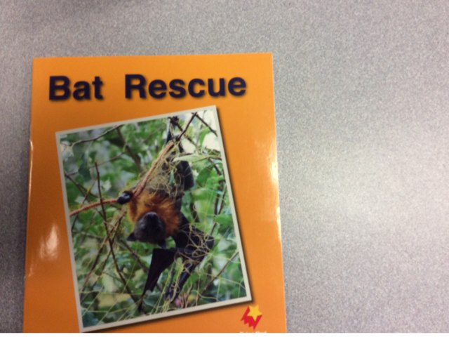 Bat Rescue by Courtney Heller
