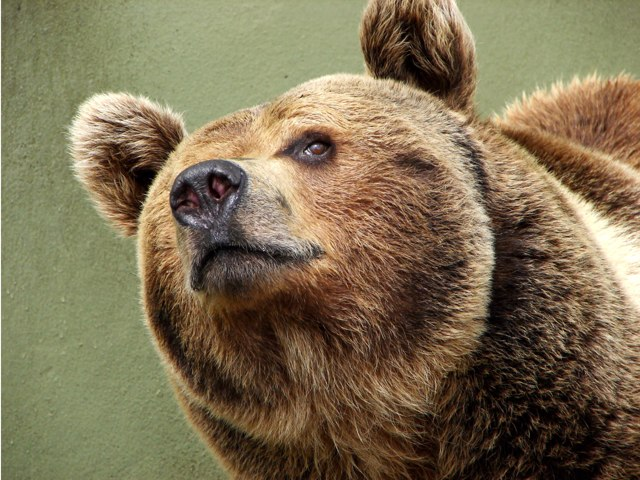 Bear Hunt  by Aliesha Davies