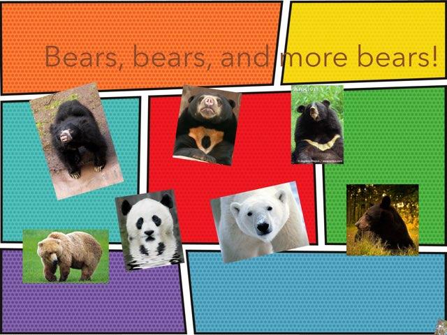 Bears Bears And Bears by Angie Hi kale