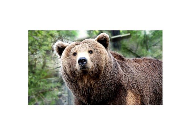Bears by Stephanie Rich