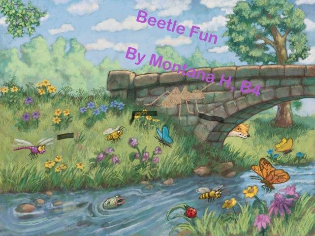 Beetle Montana' by Vv Henneberg