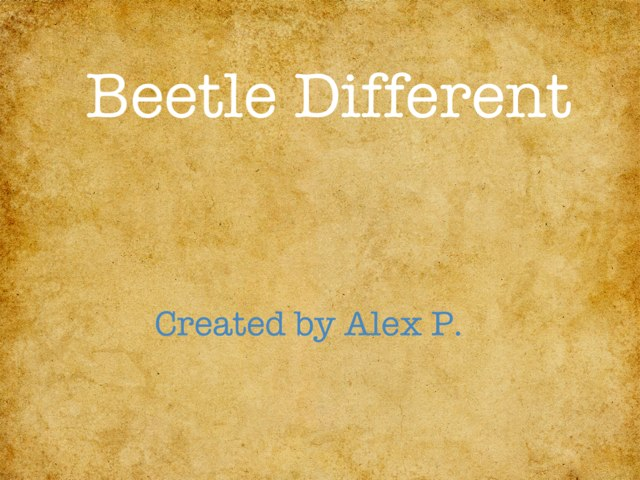 Beetle Project by Hailey Cobb