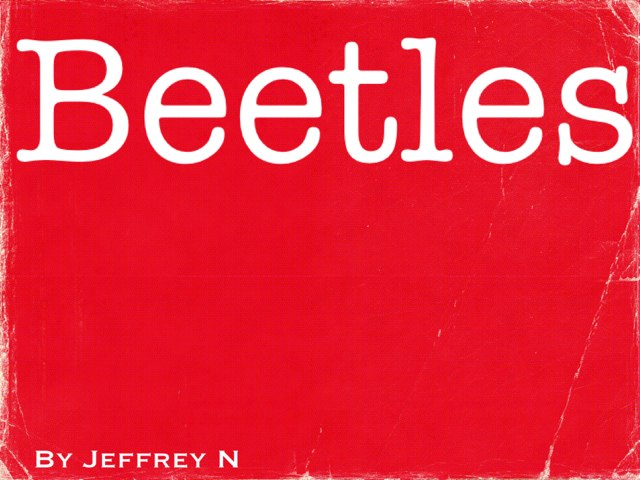Beetles Project  by Hailey Cobb