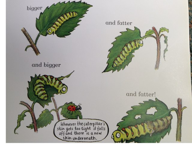 Ben's Caterpillar Game by Margaret Lonsdale