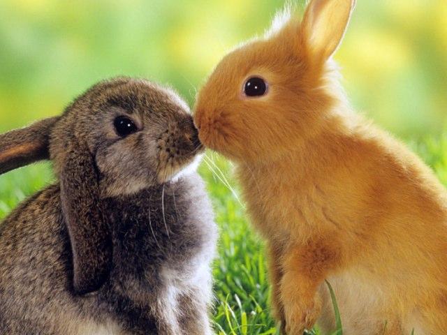 Big Rabbit by Jamie Mcpake
