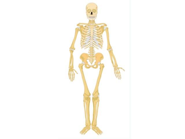 Billy Skeleton Y4a by Mr Parkinson