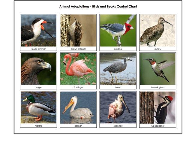Bird Beaks by Brad levenhagen