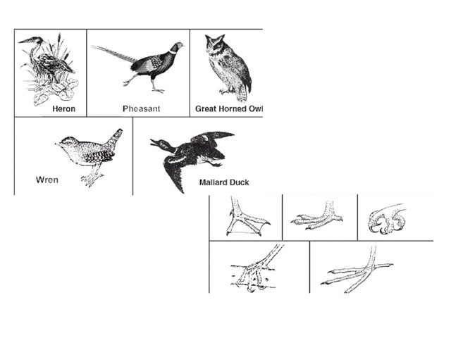 Bird Feet by Brad levenhagen