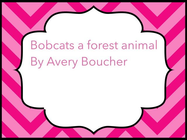Bobcat by Amy Clay