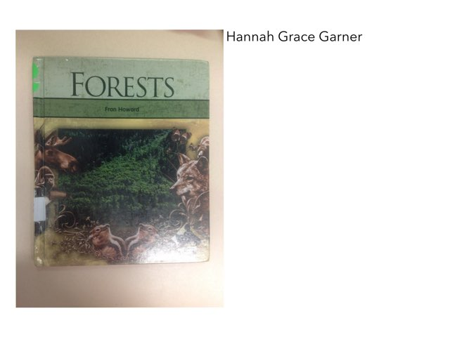 Book Report Forest By Hannah by Christine Snow