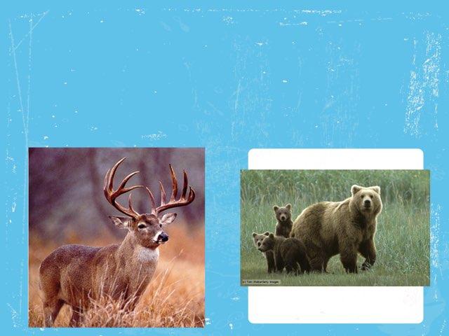 Buck And Bear by Ann nizi