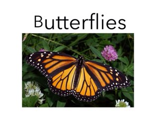 Butterflies and Chrysalis 17 by Room 207