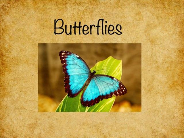 Butterflies by Amanda Kae
