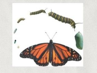 Butterfly Life Cycle Maria Clara Rachel by Academic Tech