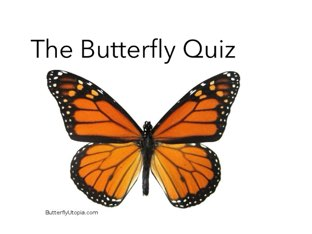 Butterfly Quiz by Room 207