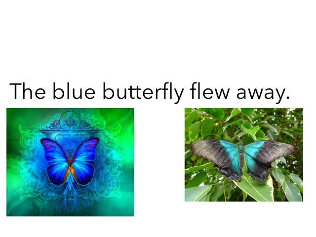 Butterfly by Khoua Vang