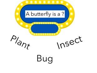 Butterflyriffic  by Courtney Durbin