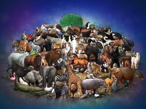 Vadonélő és háziállatok by Petra Király
