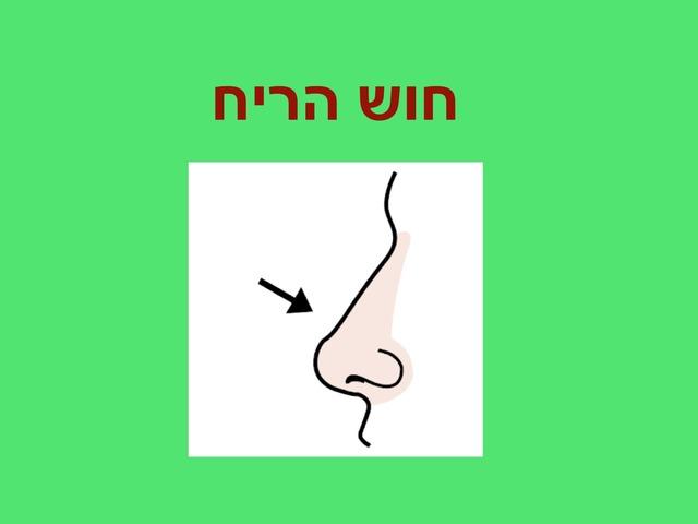חוש הריח by Miriam Tilkin