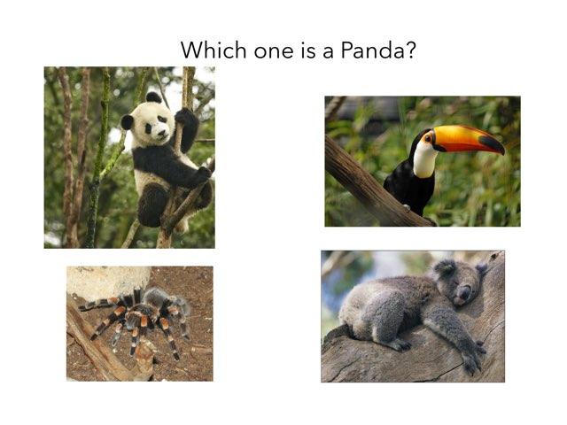 Panda Quiz by Servis k22